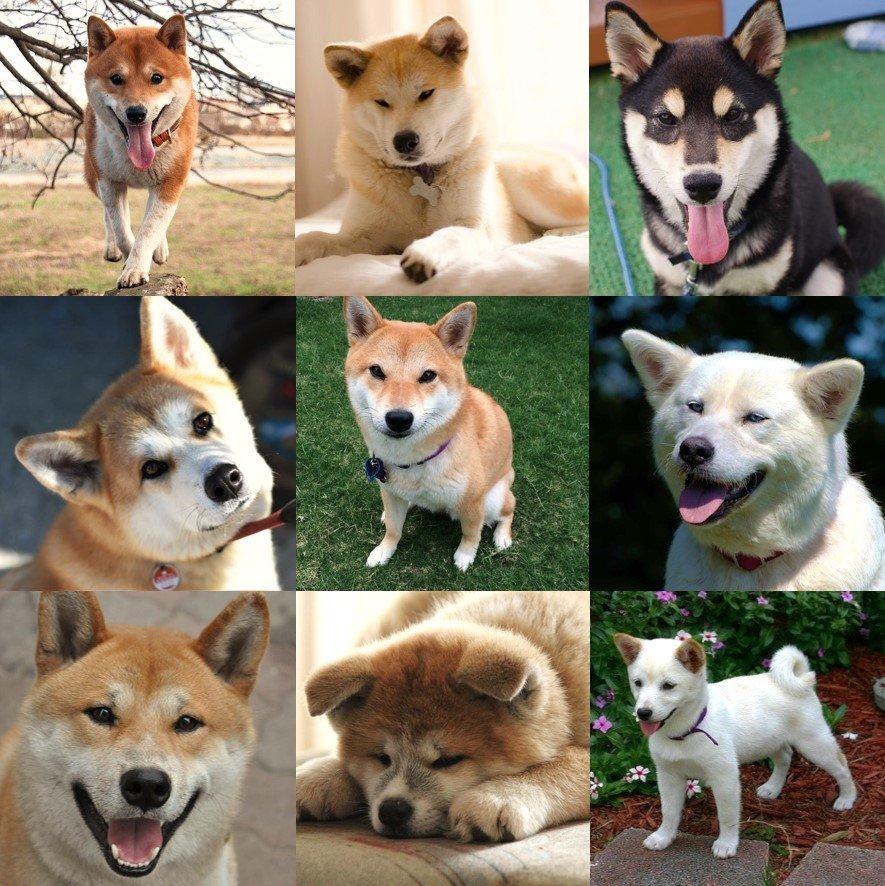日本原生犬