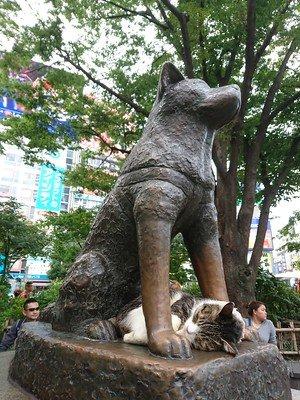 日本犬 秋田犬